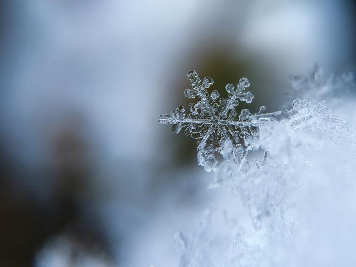 Boostez votre organisme en hiver avec la spiruline