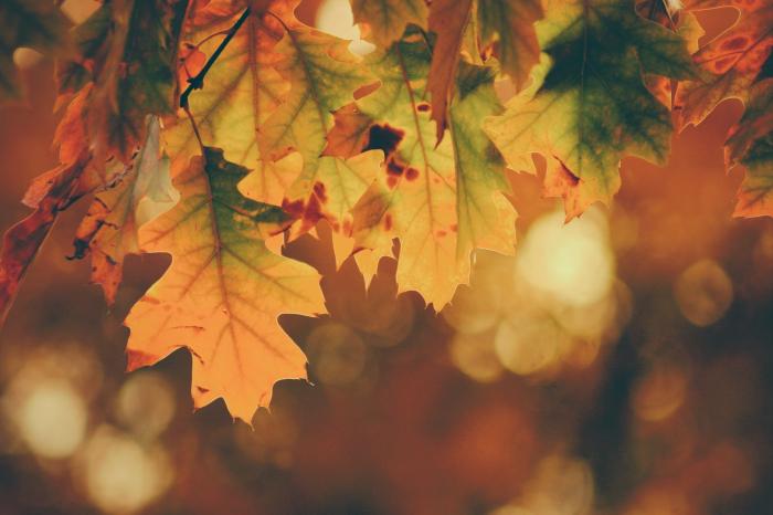 Faire une cure de spiruline en automne